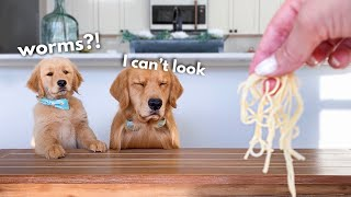 Dog Reviews Food With Son Tucker Taste Test 22 MD quality image