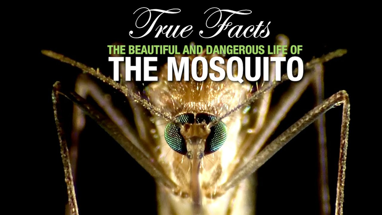 True Facts: The Mosquito HD quality image