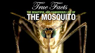 True Facts: The Mosquito MD quality image