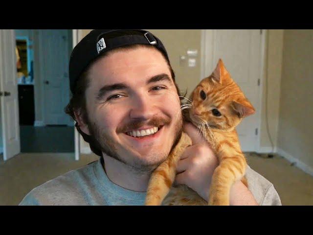 I adopted a cat. HQ quality image