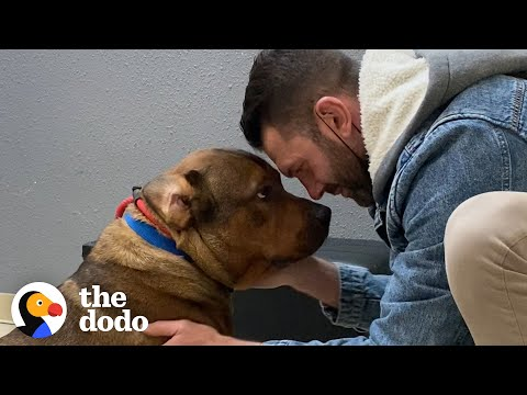 Guy Promises He's Not Going To Keep His Foster Dog... The Dodo Foster Diaries MQ quality image
