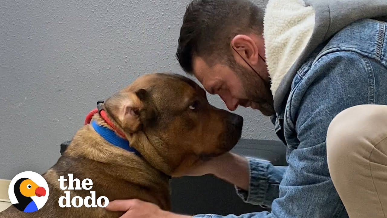Guy Promises He's Not Going To Keep His Foster Dog... The Dodo Foster Diaries HD quality image