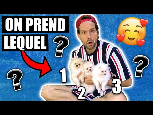 ON ADOPTE UN DEUXIEME CHIEN POMERANIAN - CARL ISAAC VLOG HQ quality image