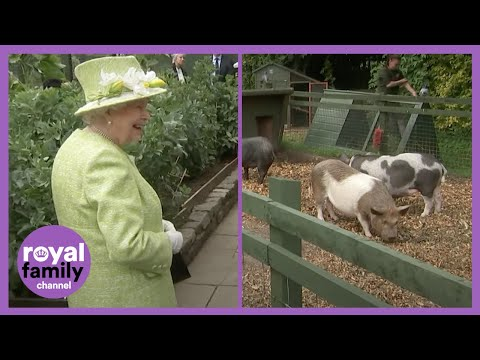 The Queen Laughing at This Piglet is the Best! MQ quality image