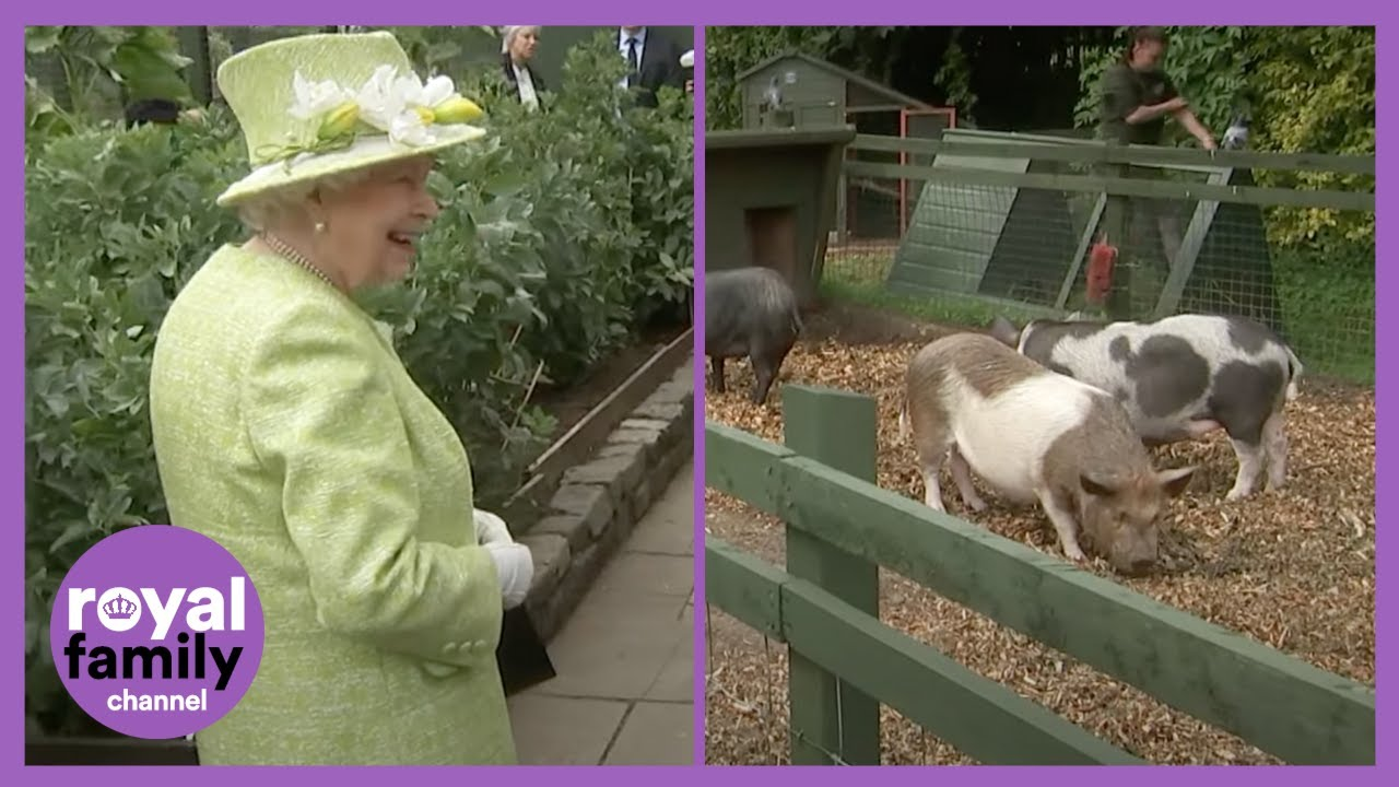 The Queen Laughing at This Piglet is the Best! HD quality image