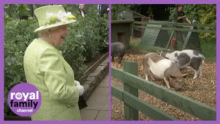 The Queen Laughing at This Piglet is the Best! MD quality image