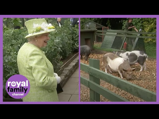 The Queen Laughing at This Piglet is the Best! HQ quality image