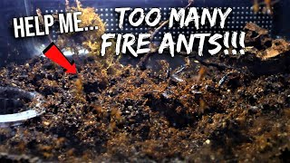 PLEASE HELP: What Should I Do With All These FIRE ANTS? Screenshot