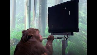 Monkey MindPong Screenshot